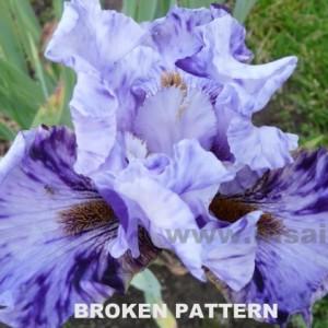 broken_pattern