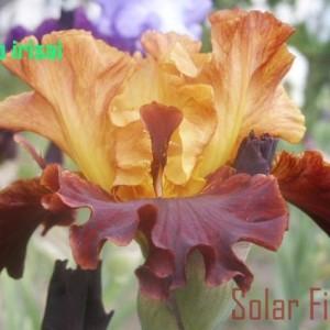 solar_fire-2