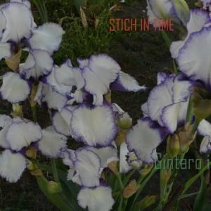 stich_in-2