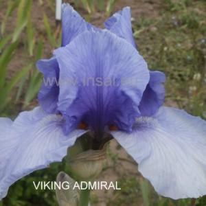 viking_admiral-1